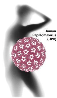 Часто задаваемые вопросы о вирусе папилломы человека