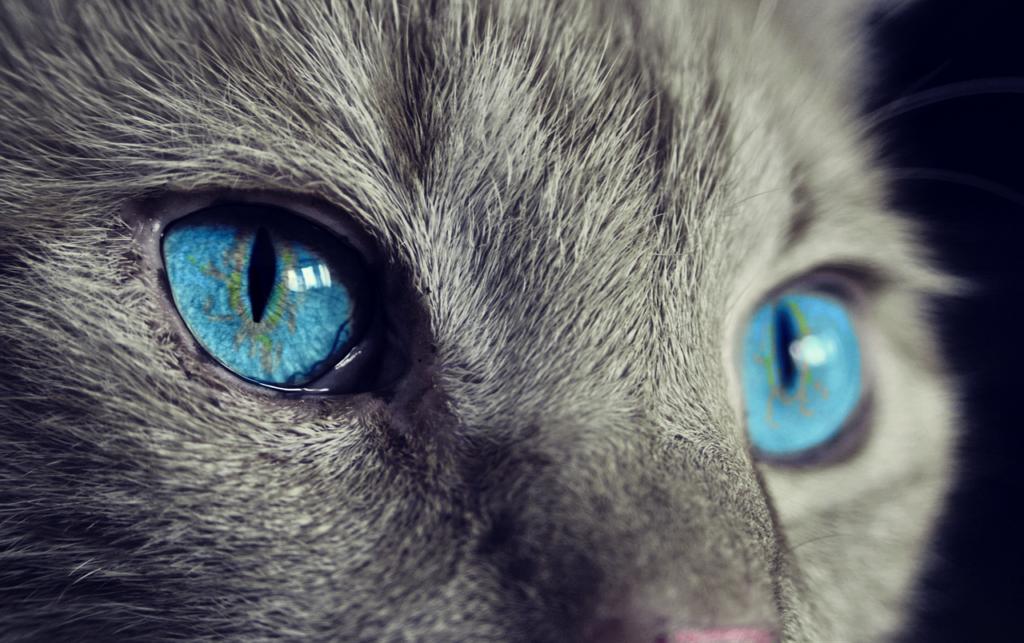 5 лучших продуктов для здоровья глаз